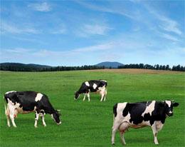 Organic Farm Puriflo Effluent Treatment _Case _Study